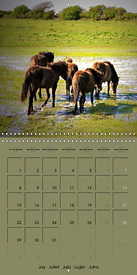 The Wild Horses of Langeland (Wall Calendar 2019 300 × 300 mm Square) - Produktdetailbild 7