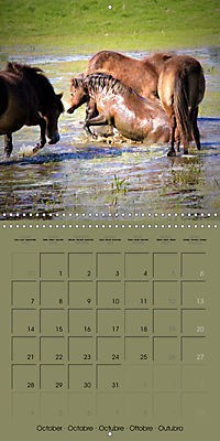 The Wild Horses of Langeland (Wall Calendar 2019 300 × 300 mm Square) - Produktdetailbild 10
