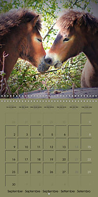 The Wild Horses of Langeland (Wall Calendar 2019 300 × 300 mm Square) - Produktdetailbild 9