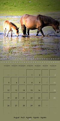 The Wild Horses of Langeland (Wall Calendar 2019 300 × 300 mm Square) - Produktdetailbild 8