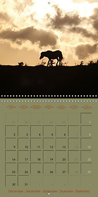 The Wild Horses of Langeland (Wall Calendar 2019 300 × 300 mm Square) - Produktdetailbild 12