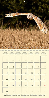 The Wildlife of England (Wall Calendar 2019 300 × 300 mm Square) - Produktdetailbild 9