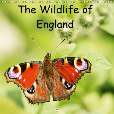 The Wildlife of England (Wall Calendar 2019 300 × 300 mm Square), Paul Smith