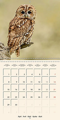 The Wildlife of England (Wall Calendar 2019 300 × 300 mm Square) - Produktdetailbild 4