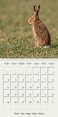The Wildlife of England (Wall Calendar 2019 300 × 300 mm Square) - Produktdetailbild 3