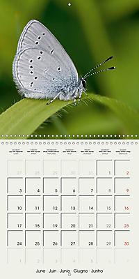 The Wildlife of England (Wall Calendar 2019 300 × 300 mm Square) - Produktdetailbild 6