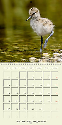 The Wildlife of England (Wall Calendar 2019 300 × 300 mm Square) - Produktdetailbild 5