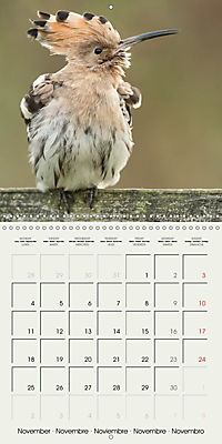 The Wildlife of England (Wall Calendar 2019 300 × 300 mm Square) - Produktdetailbild 11
