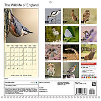 The Wildlife of England (Wall Calendar 2019 300 × 300 mm Square) - Produktdetailbild 13