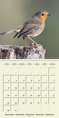 The Wildlife of England (Wall Calendar 2019 300 × 300 mm Square) - Produktdetailbild 12