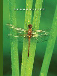 The World of Insects: Dragonflies, Sophie Lockwood