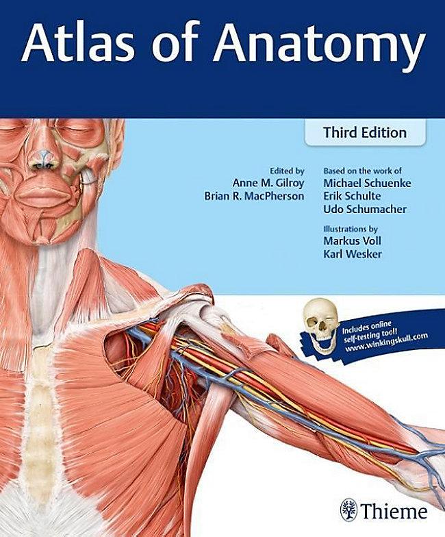Thieme Atlas Of Anatomy Ebook Jetzt Bei Weltbild
