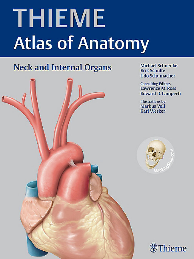 Thieme Atlas Of Anatomy Neck And Internal Organs Buch Portofrei