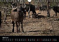 Tier-Momente in Afrika (Wandkalender 2019 DIN A4 quer) - Produktdetailbild 4