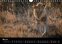 Tier-Momente in Afrika (Wandkalender 2019 DIN A4 quer) - Produktdetailbild 5