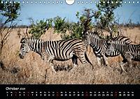 Tier-Momente in Afrika (Wandkalender 2019 DIN A4 quer) - Produktdetailbild 10