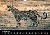 Tier-Momente in Afrika (Wandkalender 2019 DIN A4 quer) - Produktdetailbild 12