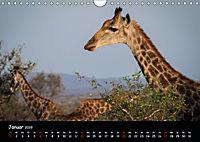 Tier-Momente in Afrika (Wandkalender 2019 DIN A4 quer) - Produktdetailbild 1