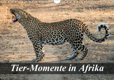 Tier-Momente in Afrika (Wandkalender 2019 DIN A4 quer), Dirk Janssen