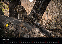 Tier-Momente in Afrika (Wandkalender 2019 DIN A4 quer) - Produktdetailbild 3
