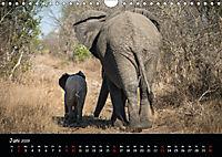 Tier-Momente in Afrika (Wandkalender 2019 DIN A4 quer) - Produktdetailbild 6