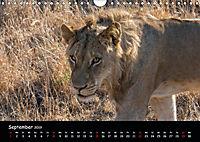 Tier-Momente in Afrika (Wandkalender 2019 DIN A4 quer) - Produktdetailbild 9