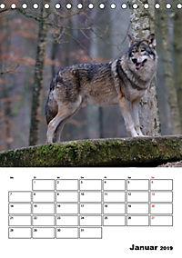 Tiere der kanadischen Rocky Mountains (Tischkalender 2019 DIN A5 hoch) - Produktdetailbild 1