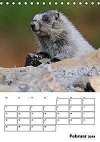 Tiere der kanadischen Rocky Mountains (Tischkalender 2019 DIN A5 hoch) - Produktdetailbild 2