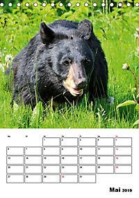 Tiere der kanadischen Rocky Mountains (Tischkalender 2019 DIN A5 hoch) - Produktdetailbild 5