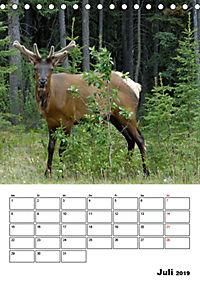 Tiere der kanadischen Rocky Mountains (Tischkalender 2019 DIN A5 hoch) - Produktdetailbild 7