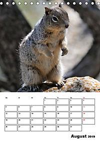 Tiere der kanadischen Rocky Mountains (Tischkalender 2019 DIN A5 hoch) - Produktdetailbild 8
