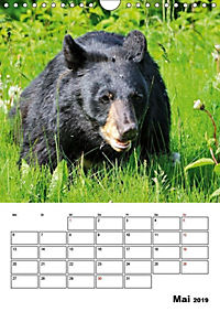 Tiere der kanadischen Rocky Mountains (Wandkalender 2019 DIN A4 hoch) - Produktdetailbild 5