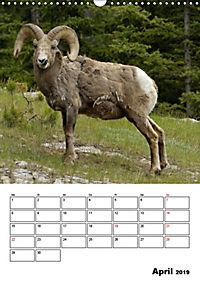 Tiere der kanadischen Rocky Mountains (Wandkalender 2019 DIN A3 hoch) - Produktdetailbild 4