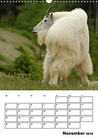 Tiere der kanadischen Rocky Mountains (Wandkalender 2019 DIN A3 hoch) - Produktdetailbild 11