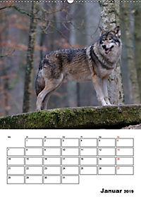 Tiere der kanadischen Rocky Mountains (Wandkalender 2019 DIN A2 hoch) - Produktdetailbild 1