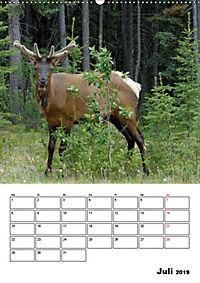Tiere der kanadischen Rocky Mountains (Wandkalender 2019 DIN A2 hoch) - Produktdetailbild 7
