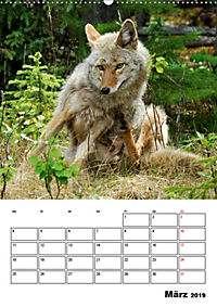 Tiere der kanadischen Rocky Mountains (Wandkalender 2019 DIN A2 hoch) - Produktdetailbild 3