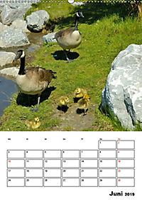 Tiere der kanadischen Rocky Mountains (Wandkalender 2019 DIN A2 hoch) - Produktdetailbild 6