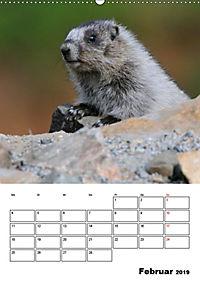 Tiere der kanadischen Rocky Mountains (Wandkalender 2019 DIN A2 hoch) - Produktdetailbild 2