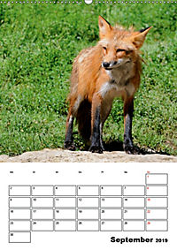 Tiere der kanadischen Rocky Mountains (Wandkalender 2019 DIN A2 hoch) - Produktdetailbild 9