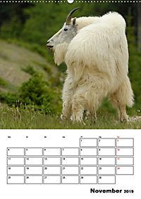 Tiere der kanadischen Rocky Mountains (Wandkalender 2019 DIN A2 hoch) - Produktdetailbild 11