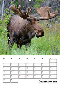 Tiere der kanadischen Rocky Mountains (Wandkalender 2019 DIN A2 hoch) - Produktdetailbild 12