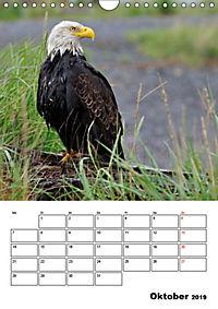 Tiere der kanadischen Rocky Mountains (Wandkalender 2019 DIN A4 hoch) - Produktdetailbild 10