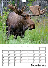 Tiere der kanadischen Rocky Mountains (Wandkalender 2019 DIN A4 hoch) - Produktdetailbild 12
