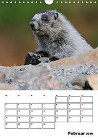 Tiere der kanadischen Rocky Mountains (Wandkalender 2019 DIN A4 hoch) - Produktdetailbild 2
