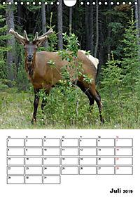Tiere der kanadischen Rocky Mountains (Wandkalender 2019 DIN A4 hoch) - Produktdetailbild 7