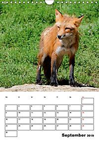 Tiere der kanadischen Rocky Mountains (Wandkalender 2019 DIN A4 hoch) - Produktdetailbild 9