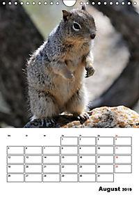 Tiere der kanadischen Rocky Mountains (Wandkalender 2019 DIN A4 hoch) - Produktdetailbild 8