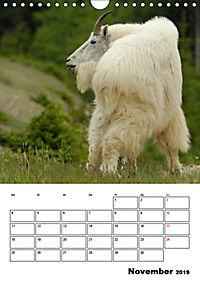 Tiere der kanadischen Rocky Mountains (Wandkalender 2019 DIN A4 hoch) - Produktdetailbild 11