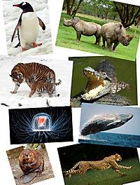 Tiere extrem - spannende Geschichten über die erstaunlichen Fähigkeiten der Tiere - Produktdetailbild 1